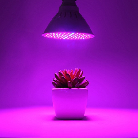 لامپ رشد گیاه 2